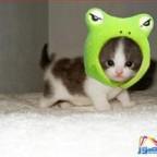thumb_funny-animals-5213200814551_1_