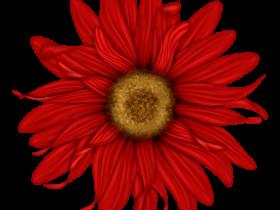 BVS_pink_valentine_bt_flower04