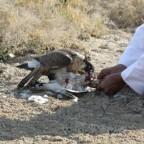 صور  من مقناص  سمو الشيخ عبدالعزيز بن عبدالرحمن ال ثاني