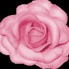BVS_pink_valentine_bt_flower02
