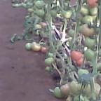مزرعة العيسائي