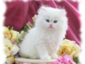 أجمل قط في العالم
