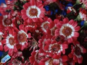 flower396_3SL-com_1_