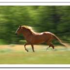 حصان سريع