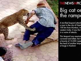 نمر هاربleopard