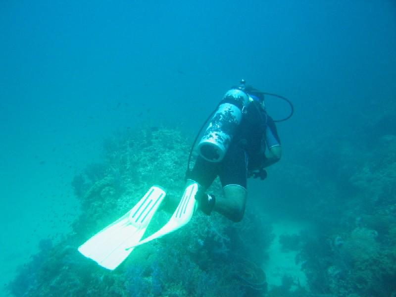 غواص بين المرجان