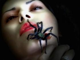 gul_spider