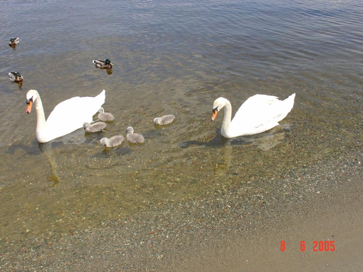طيور وماء 2