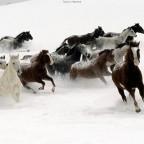 horse45