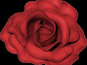 BVS_pink_valentine_bt_flower01