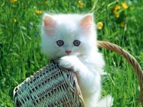 cat saidaonline