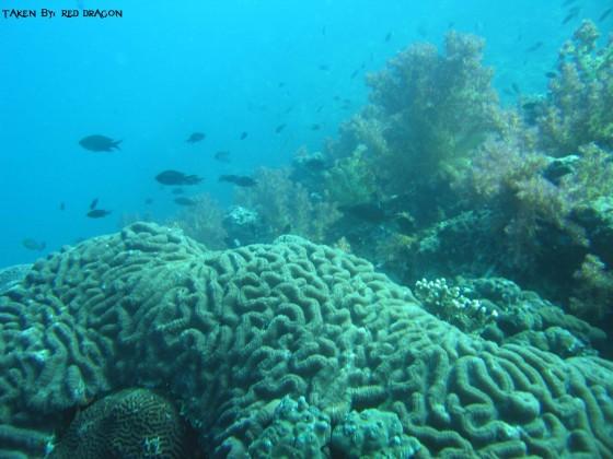 عمان تحت البحار