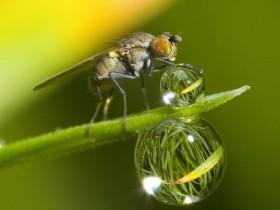 environmental photographer year 2010 fly waterdrop 26723 600x450
