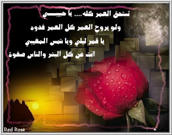 1ya7abebys_love