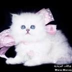 cat nice 8