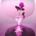 rose coeur[1]