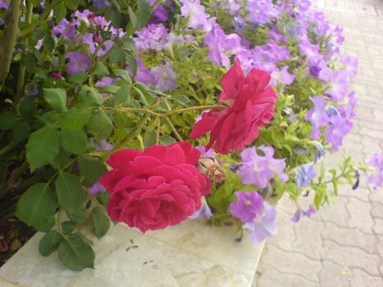 ورد بين الزهر