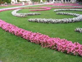 حديقة زهور